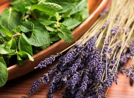Neu: Lavender Mint