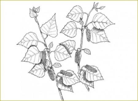 Lexikon der Heilpflanzen